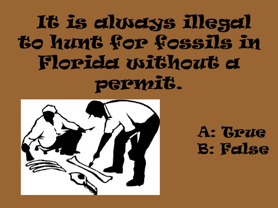 It is always illegal to hunt for fossils in Florida without a permit.