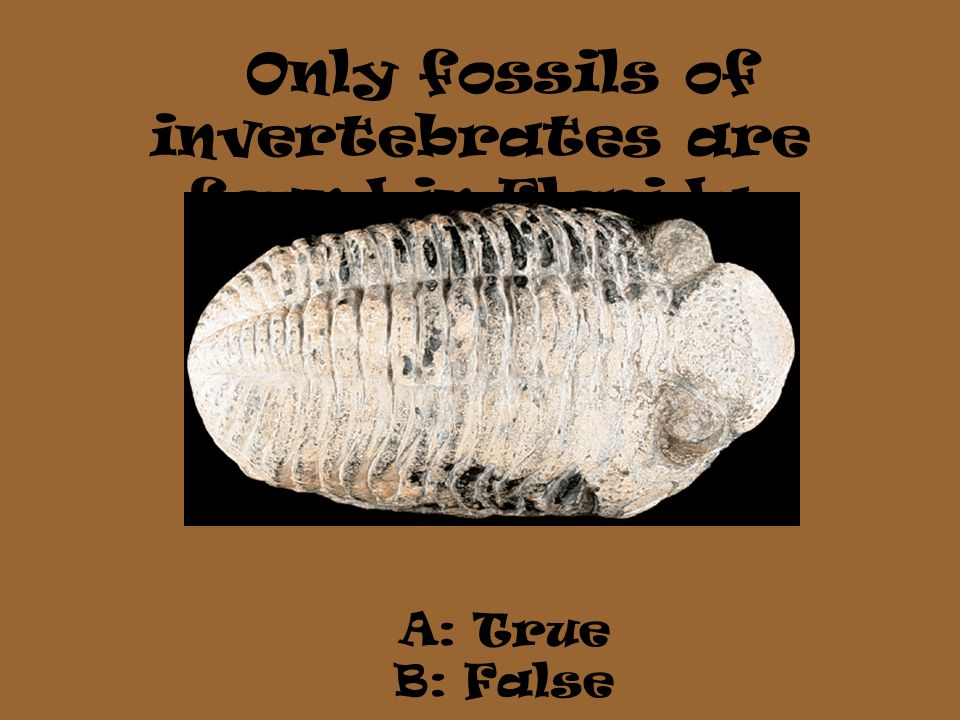 Only fossils of invertebrates are