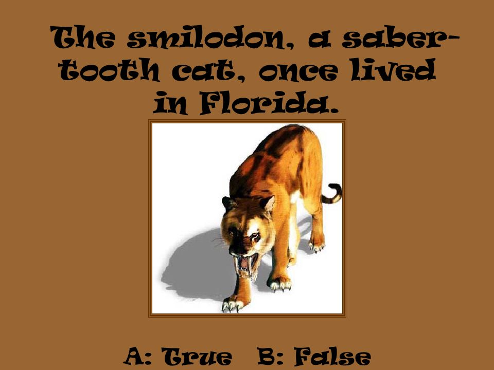 The smilodon, a saber-tooth cat, once lived