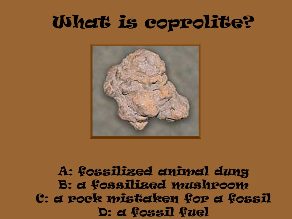 What is coprolite A: fossilized animal dung B: a fossilized mushroom