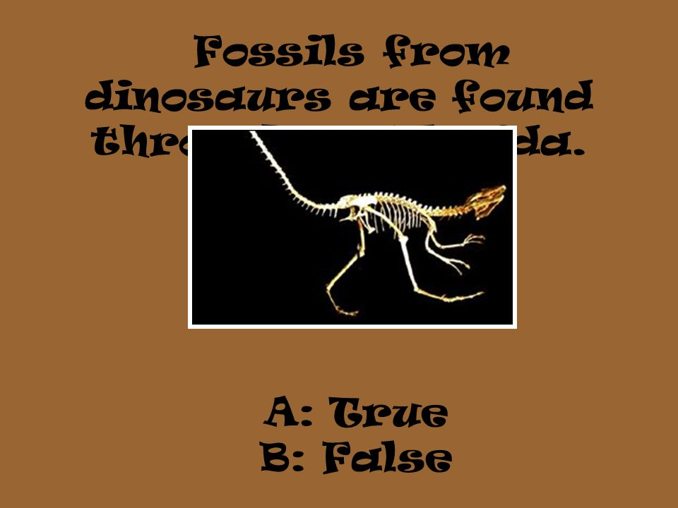 Fossils from dinosaurs are found throughout Florida.