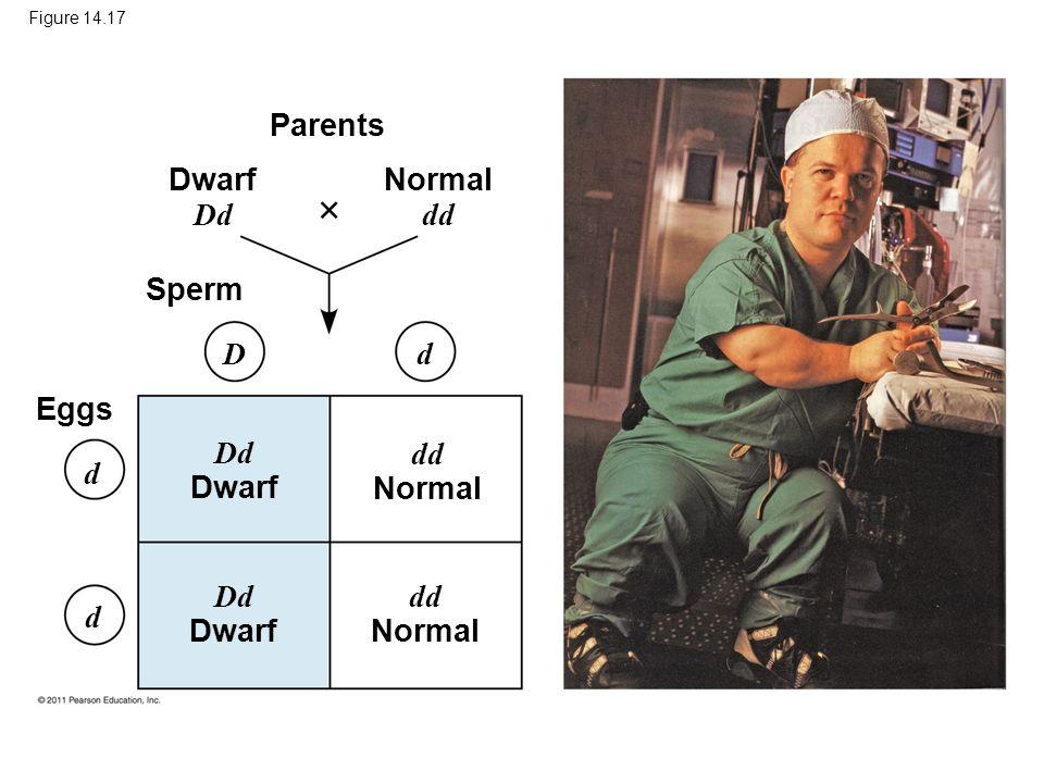 Parents Dwarf Dd Normal dd Sperm D d Eggs Dd Dwarf dd Normal d Dd