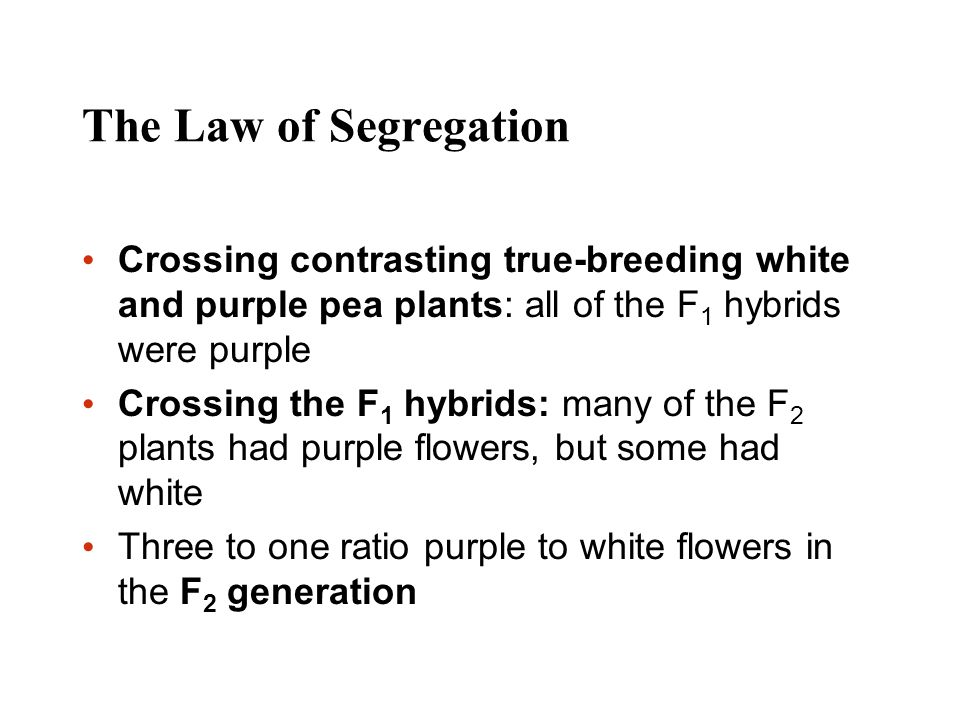 The Law of Segregation Crossing contrasting true-breeding white and purple pea plants: all of the F1 hybrids were purple.