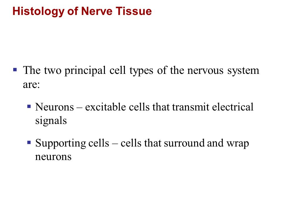 Histology of Nerve Tissue