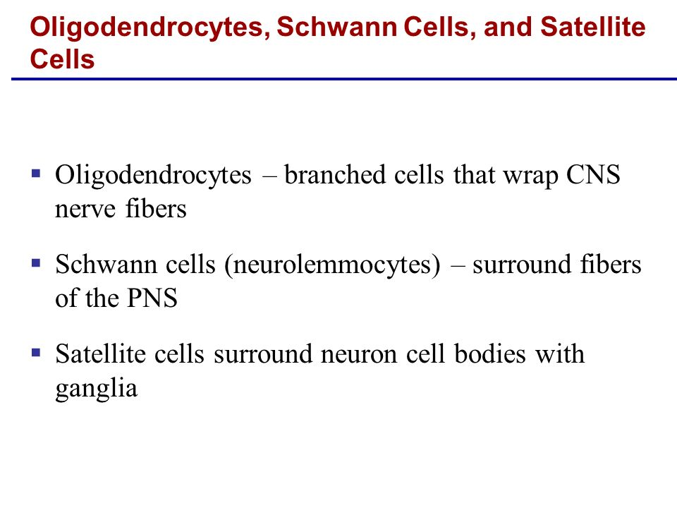 Oligodendrocytes, Schwann Cells, and Satellite Cells