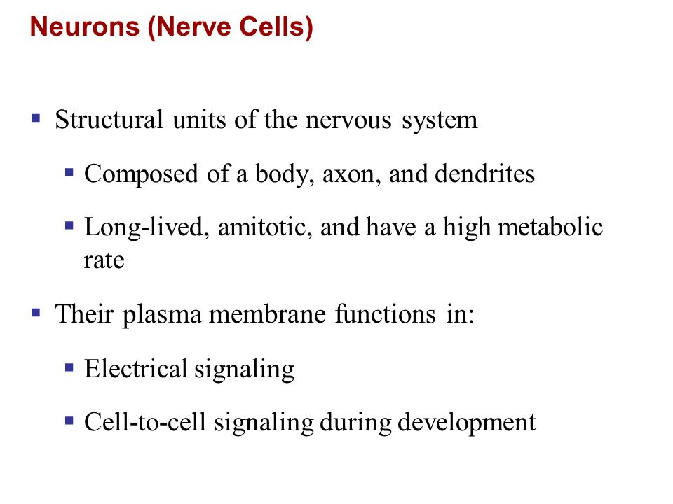 Structural units of the nervous system