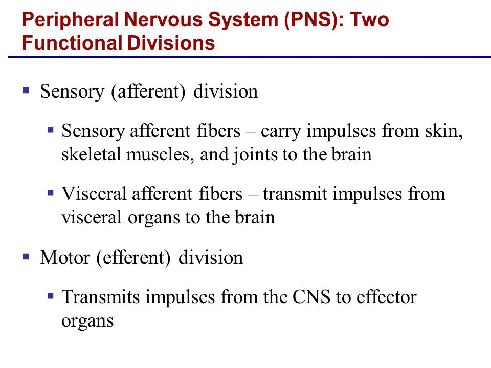 Peripheral Nervous System (PNS): Two Functional Divisions