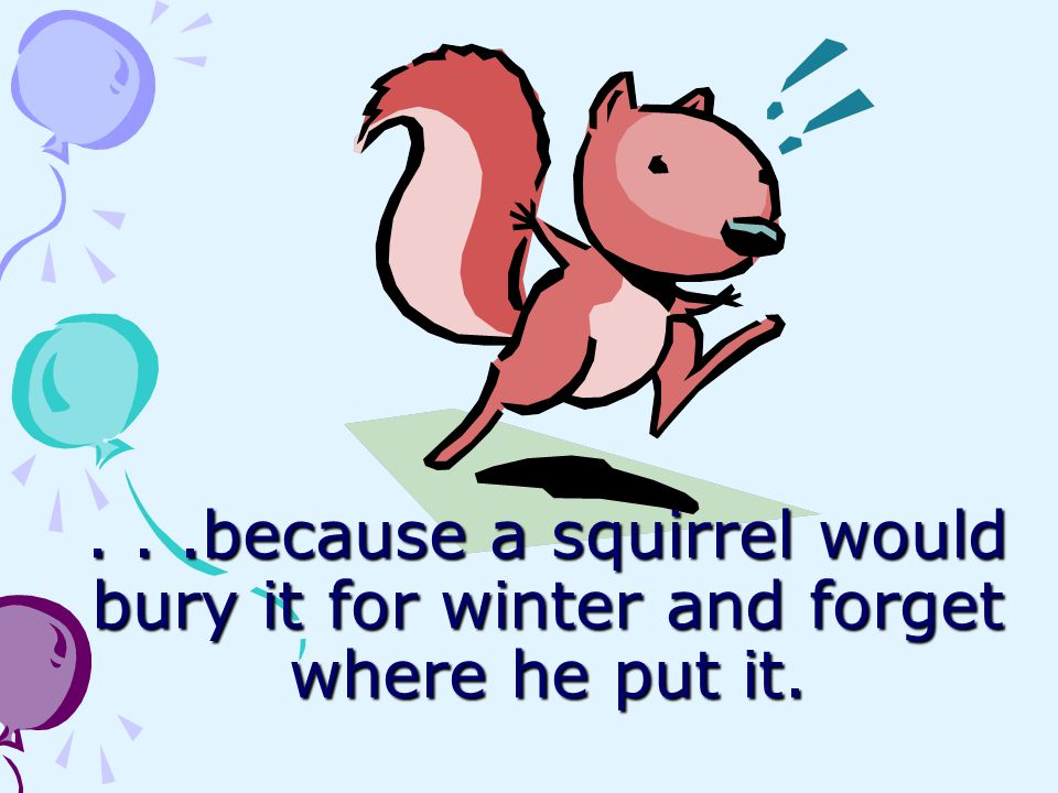 . . .because a squirrel would bury it for winter and forget where he put it.