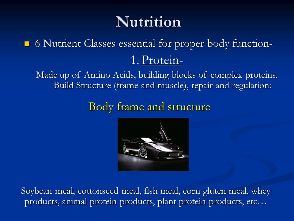 Nutrition Protein- Body frame and structure