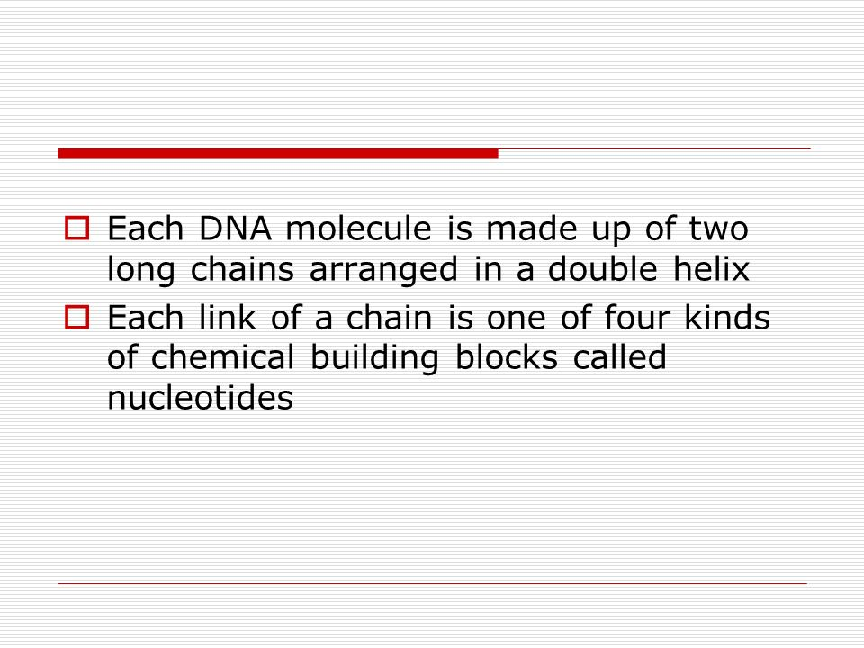 Each DNA molecule is made up of two long chains arranged in a double helix