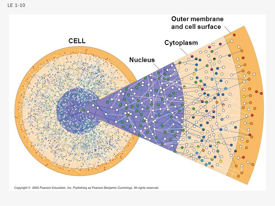 LE 1-10 Outer membrane and cell surface CELL Cytoplasm Nucleus