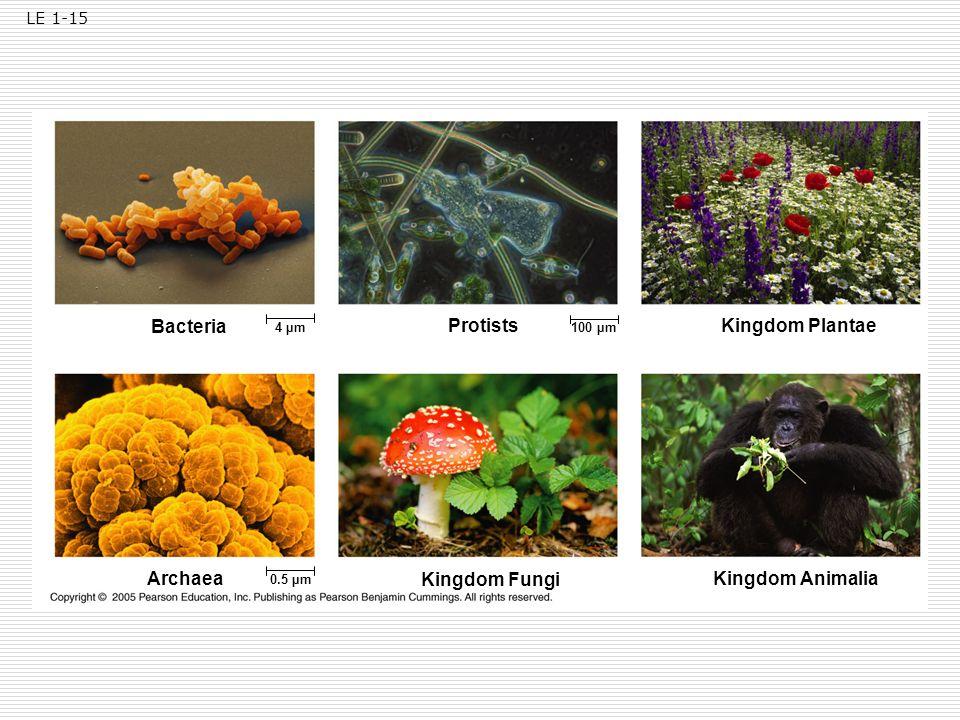 Bacteria Protists Kingdom Plantae Archaea Kingdom Fungi