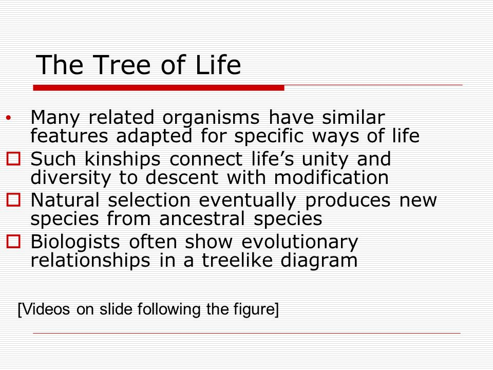 The Tree of Life Many related organisms have similar features adapted for specific ways of life.