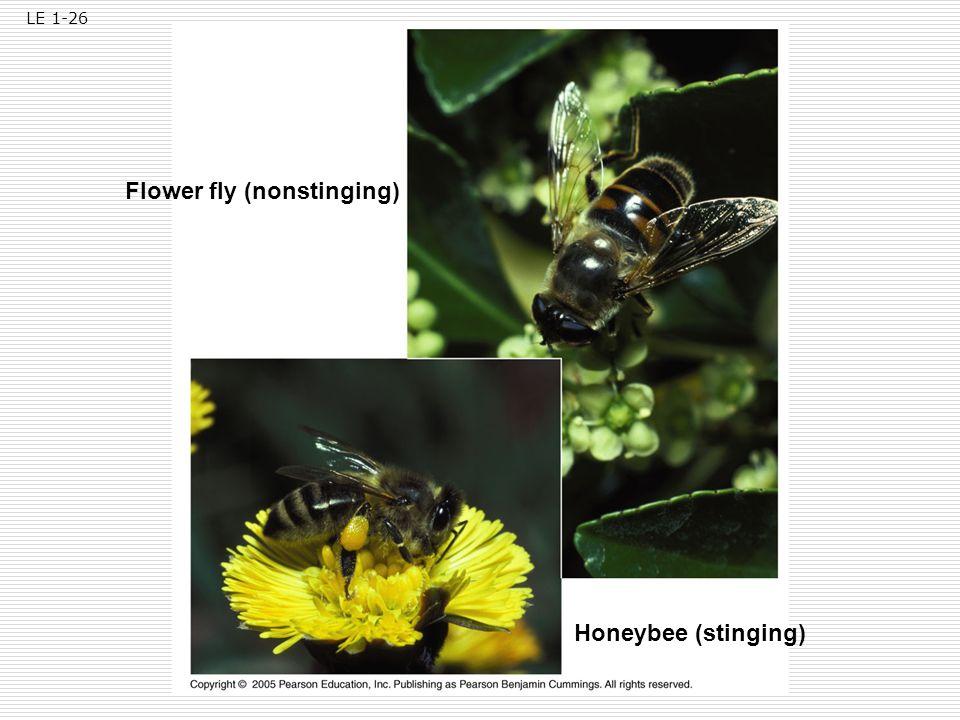 Flower fly (nonstinging)