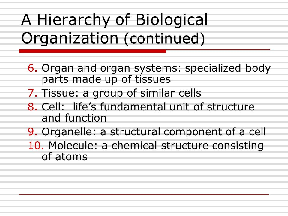 A Hierarchy of Biological Organization (continued)