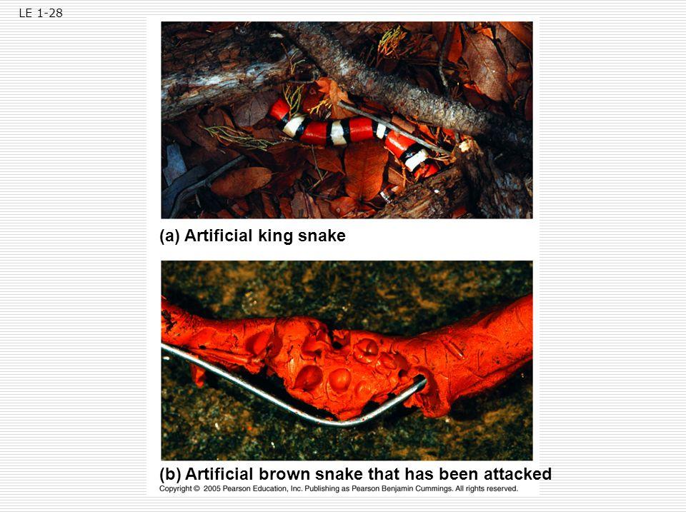 (a) Artificial king snake