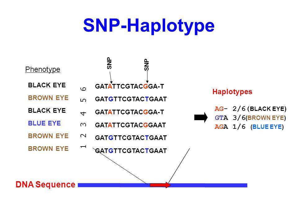 SNP-Haplotype DNA Sequence Phenotype Haplotypes 1 2 3 4 5 6