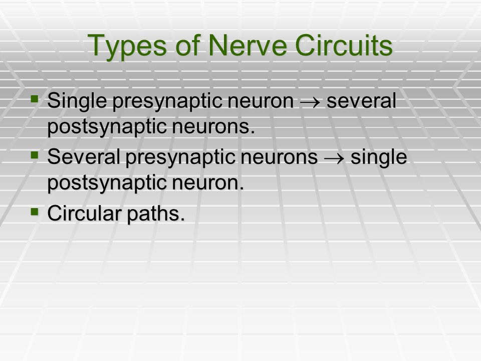 Types of Nerve Circuits
