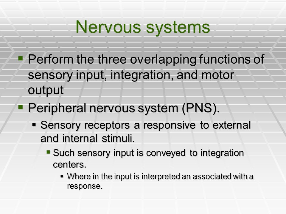 Nervous systems Perform the three overlapping functions of sensory input, integration, and motor output.