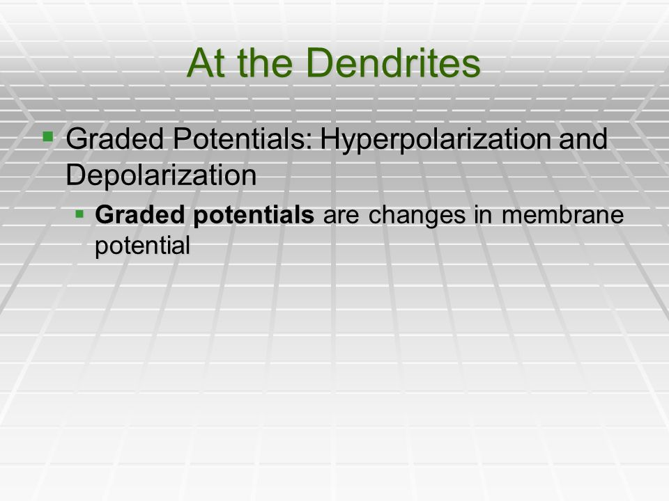 At the Dendrites Graded Potentials: Hyperpolarization and Depolarization.