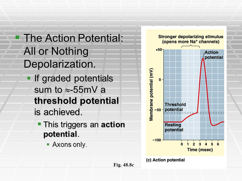 The Action Potential: All or Nothing Depolarization.