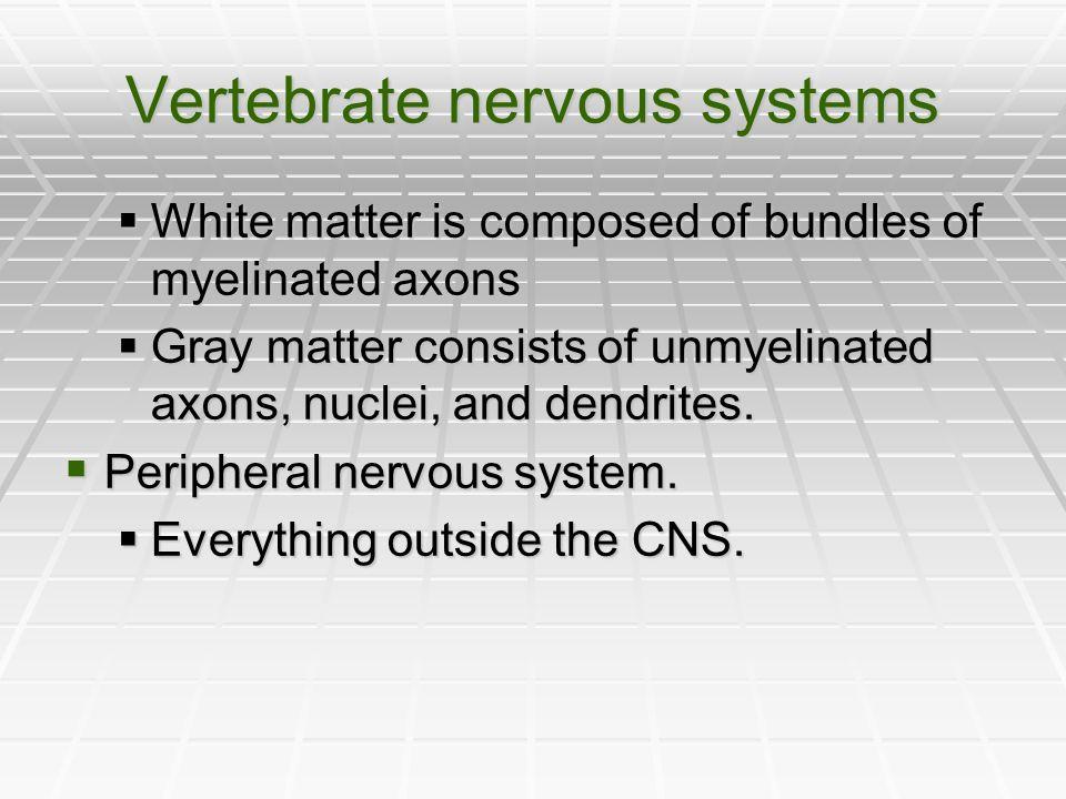 Vertebrate nervous systems
