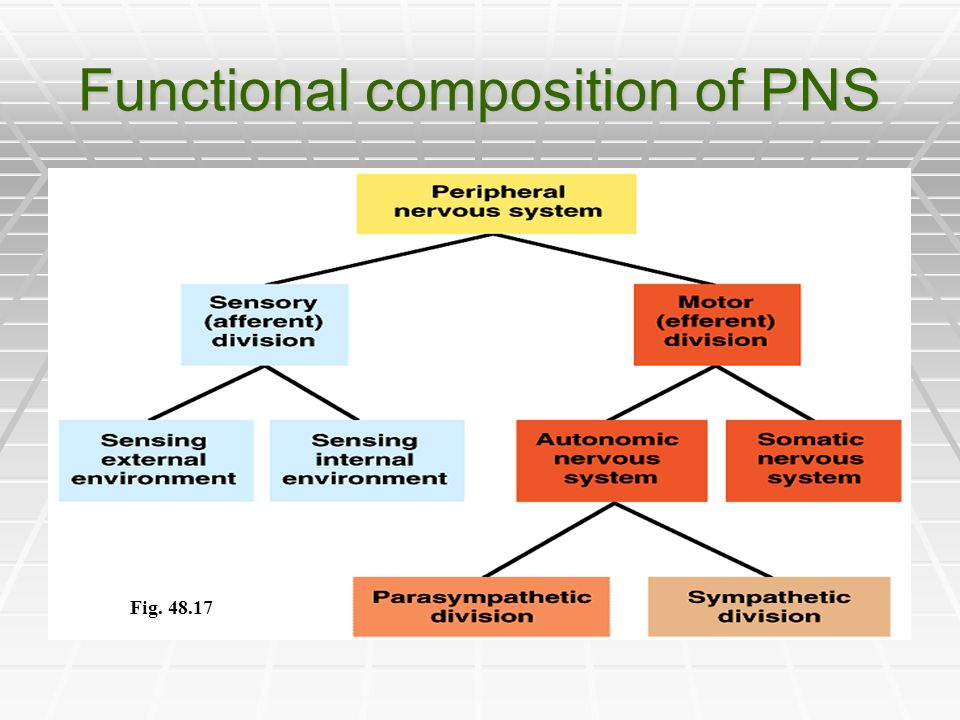 Functional composition of PNS