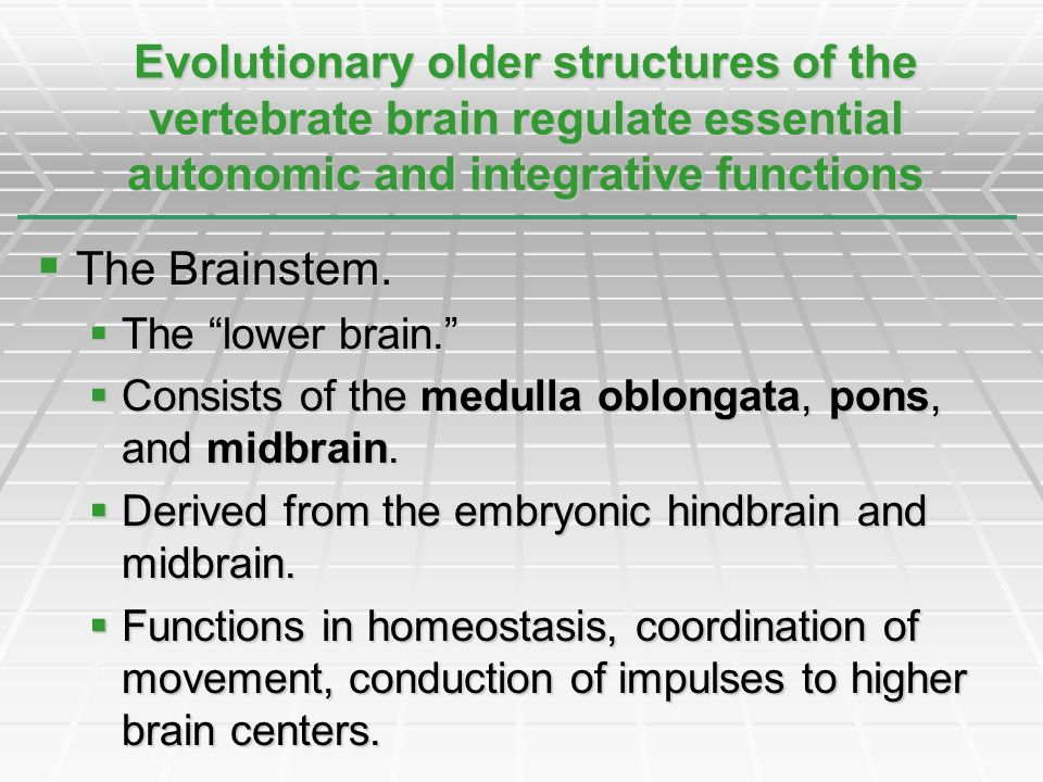 Evolutionary older structures of the vertebrate brain regulate essential autonomic and integrative functions