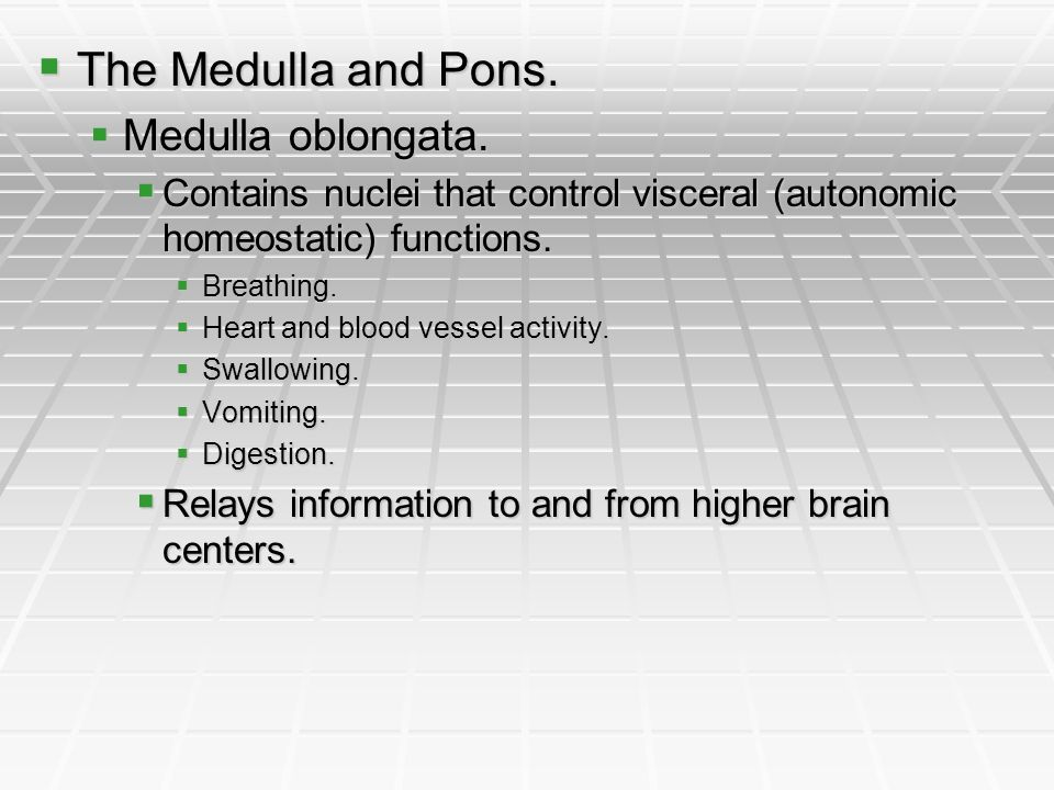 The Medulla and Pons. Medulla oblongata.
