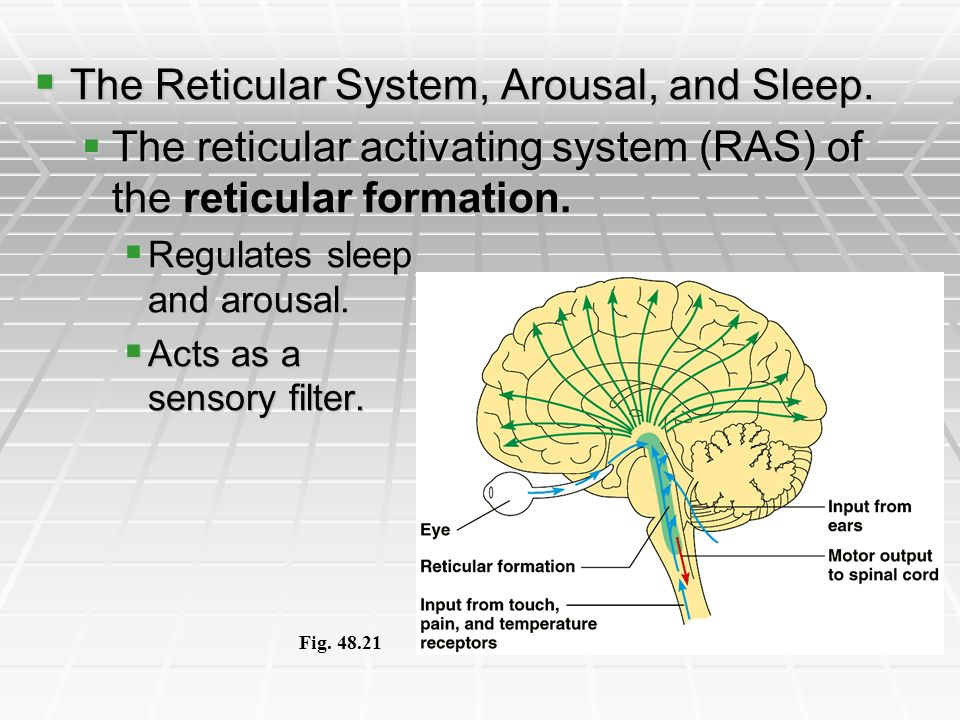 The Reticular System, Arousal, and Sleep.
