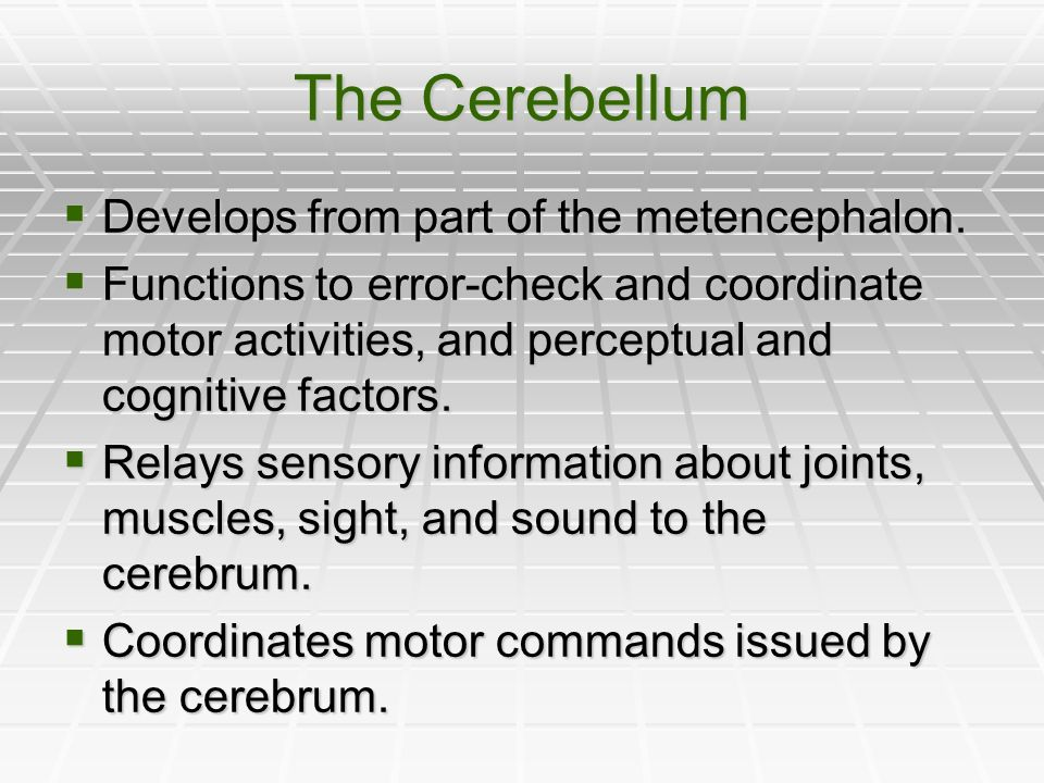The Cerebellum Develops from part of the metencephalon.