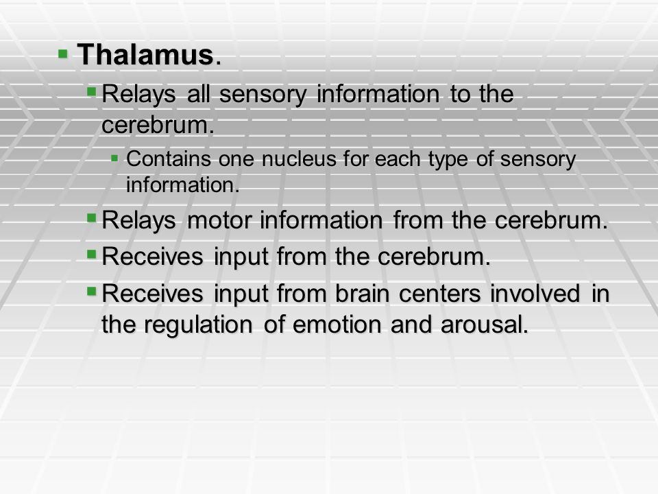 Thalamus. Relays all sensory information to the cerebrum.