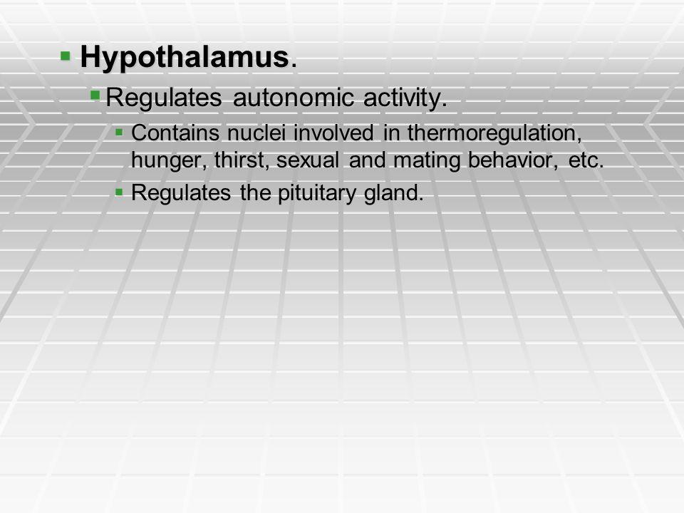 Hypothalamus. Regulates autonomic activity.