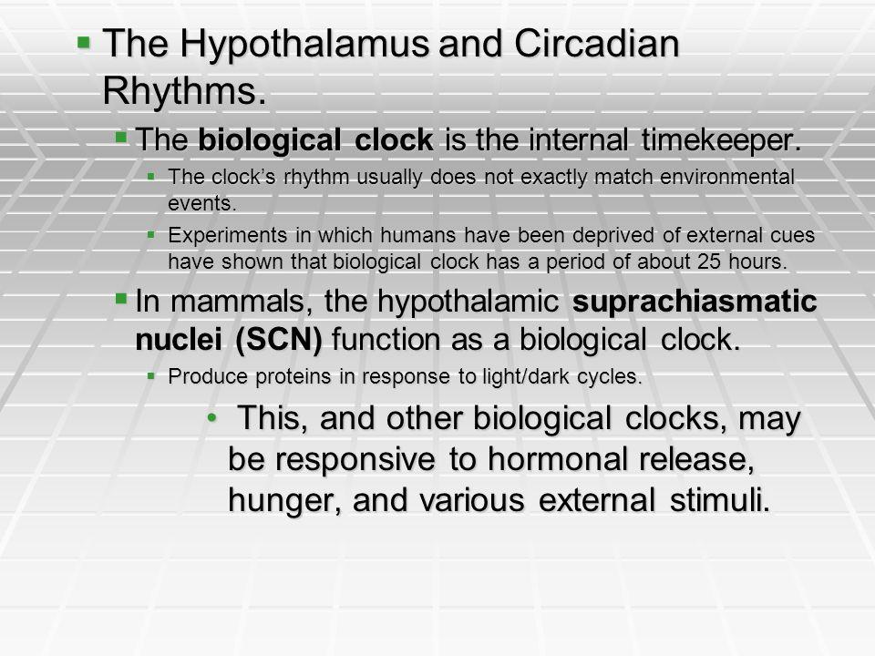 The Hypothalamus and Circadian Rhythms.