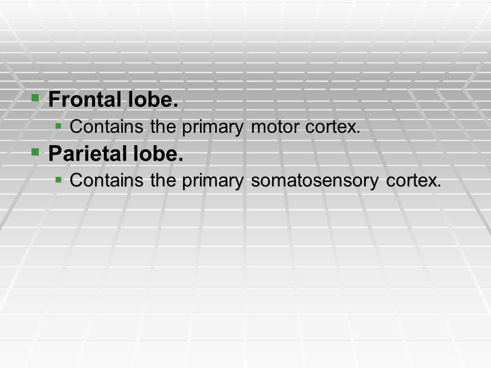Frontal lobe. Parietal lobe. Contains the primary motor cortex.