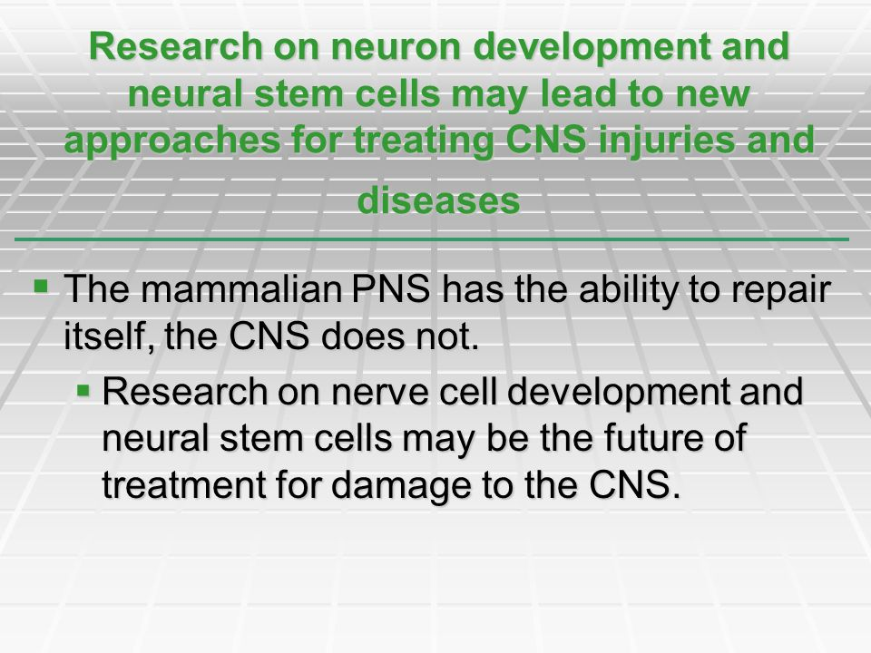 Research on neuron development and neural stem cells may lead to new approaches for treating CNS injuries and diseases