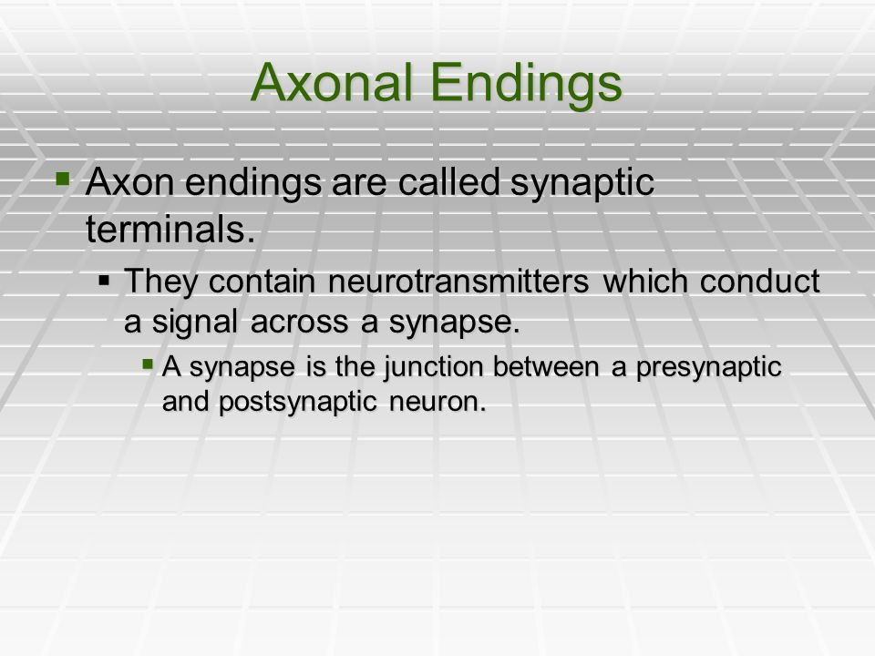 Axonal Endings Axon endings are called synaptic terminals.