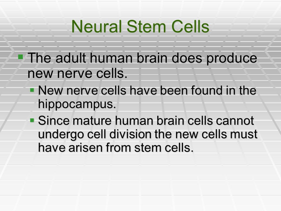 Neural Stem Cells The adult human brain does produce new nerve cells.