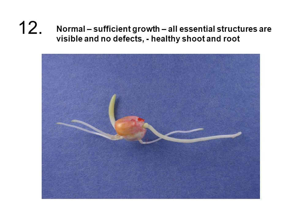 12. Normal – sufficient growth – all essential structures are