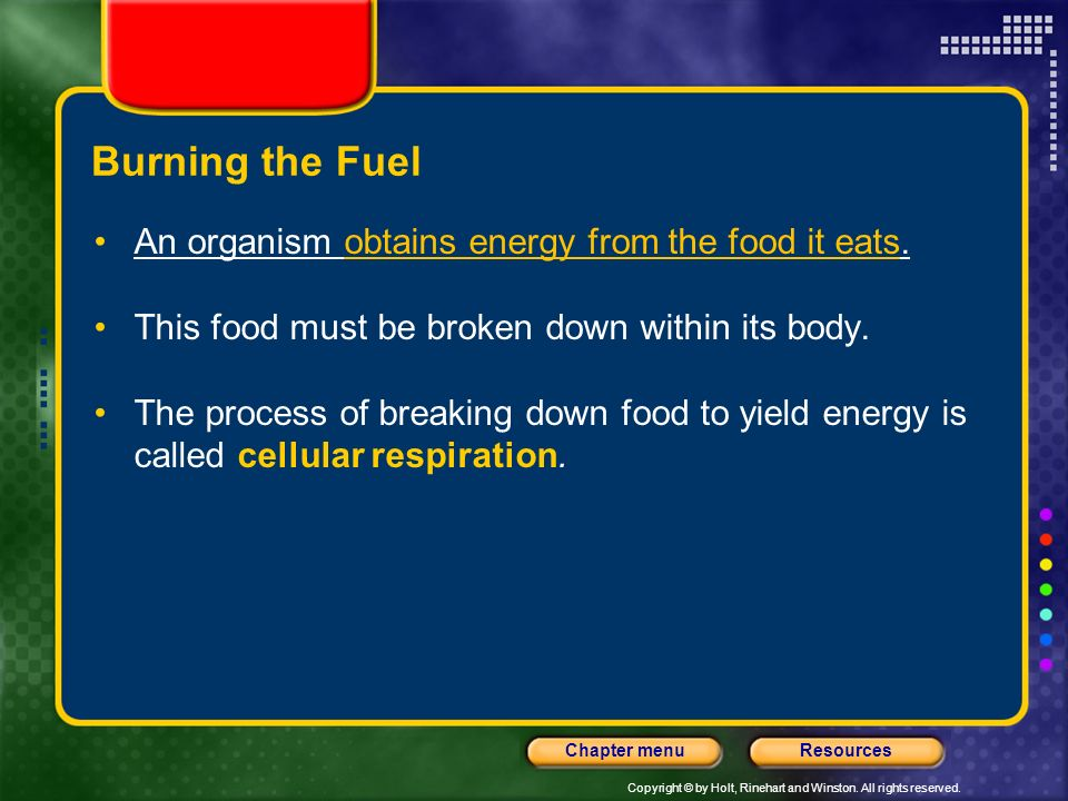 Burning the Fuel An organism obtains energy from the food it eats.