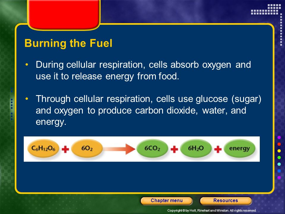 Burning the Fuel During cellular respiration, cells absorb oxygen and use it to release energy from food.