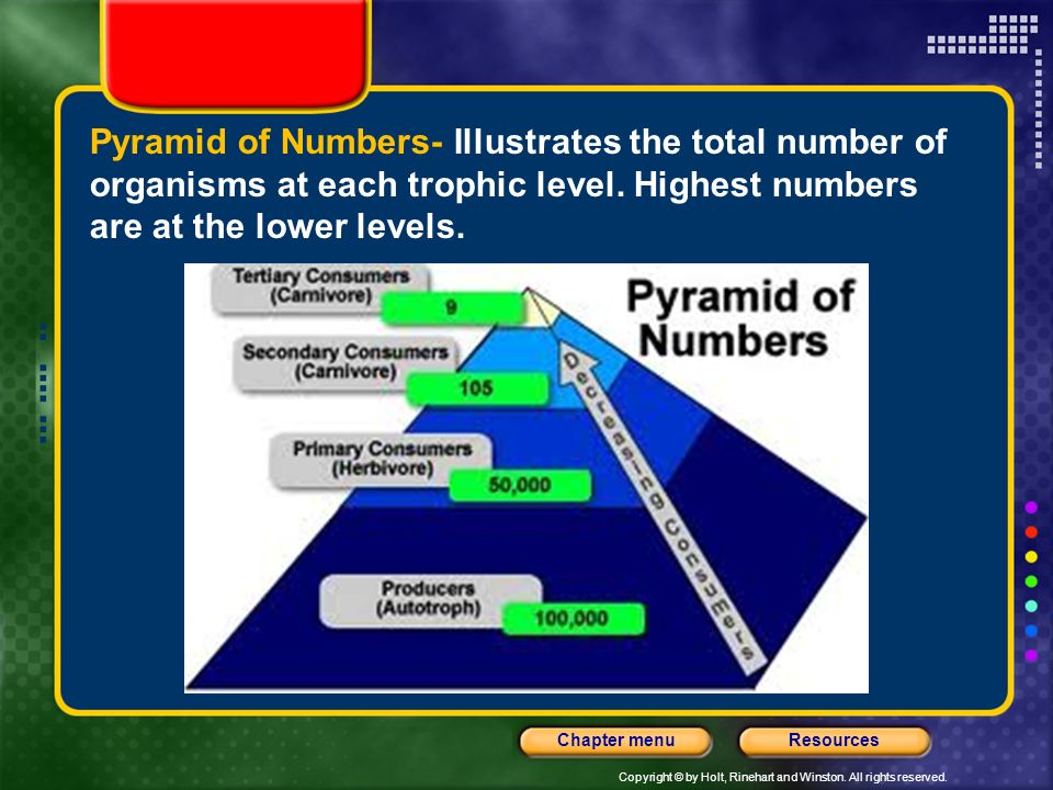 Pyramid of Numbers- Illustrates the total number of organisms at each trophic level.