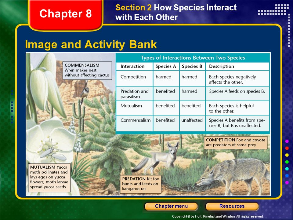 Image and Activity Bank