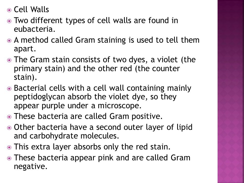Cell Walls Two different types of cell walls are found in eubacteria. A method called Gram staining is used to tell them apart.