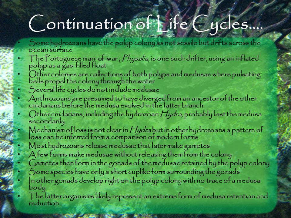 Continuation of Life Cycles….