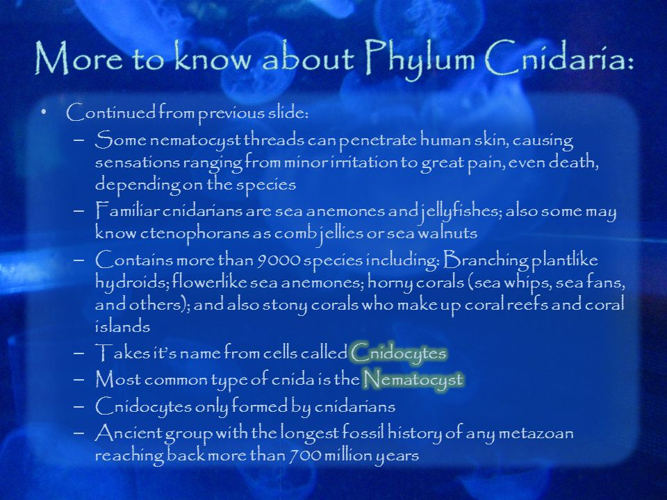 More to know about Phylum Cnidaria: