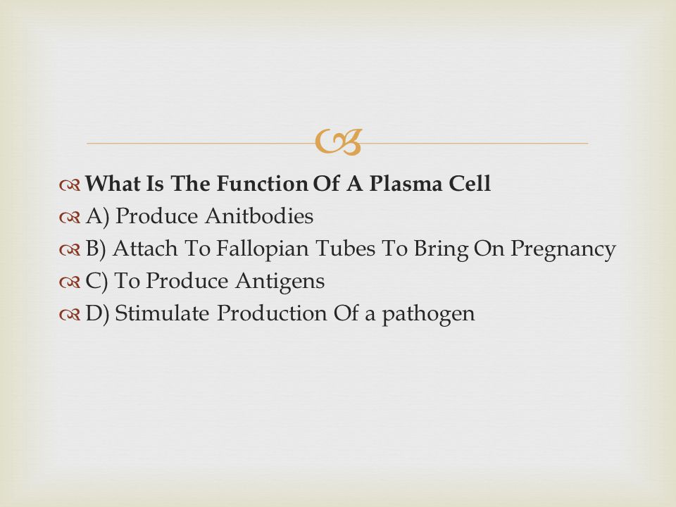 What Is The Function Of A Plasma Cell