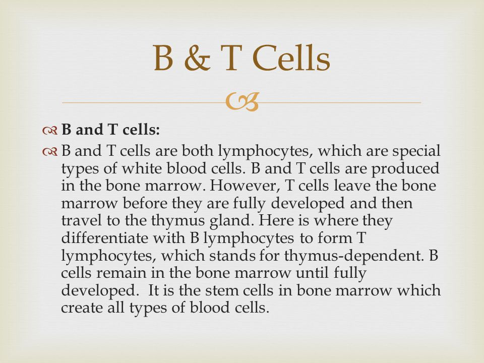 B & T Cells B and T cells: