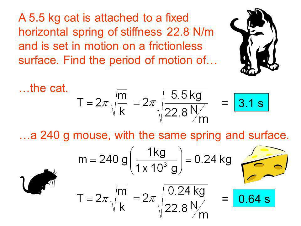 A 5.5 kg cat is attached to a fixed