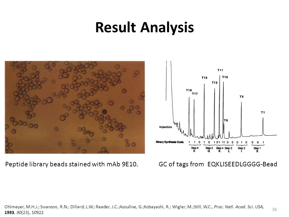 Result Analysis Peptide library beads stained with mAb 9E10.